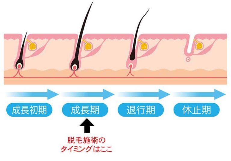 毛の毛周期